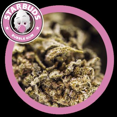 Bubble Gum - Starbuds, CBD flowers