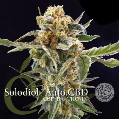 Solodiol Auto CBD Samen - Elite Seeds, Stecklinge und Samen