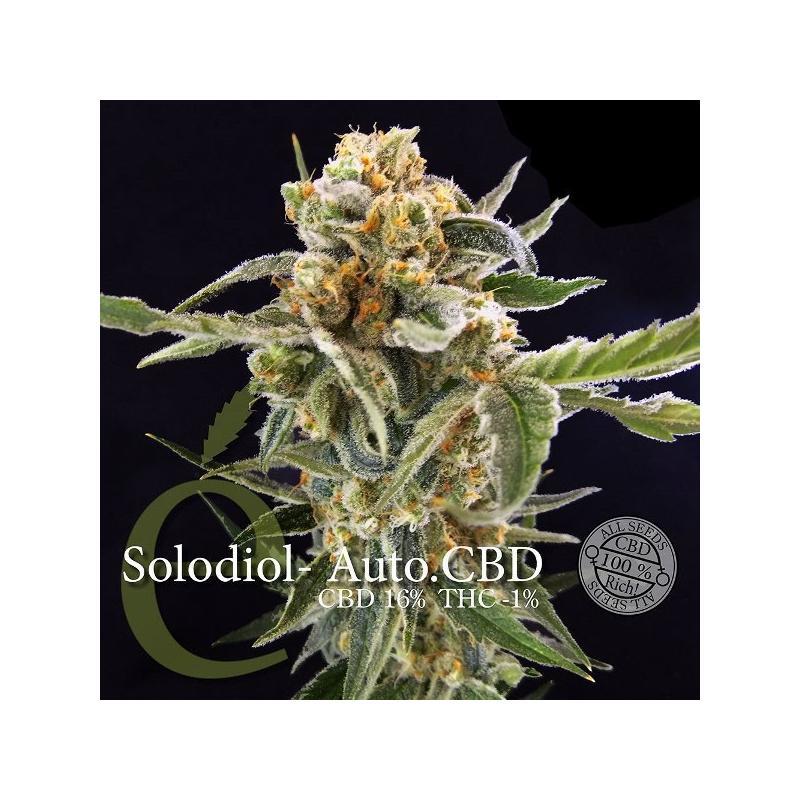 Graines Solodiol Auto CBD - Elite Seeds, Boutures et graines