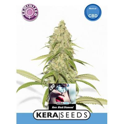 Black Diamond CBD Samen - Kera Seeds, Stecklinge und Samen