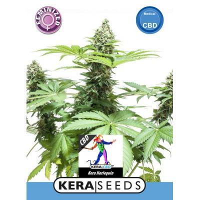 Harlequin CBD Samen - Kera Seeds, Stecklinge und Samen