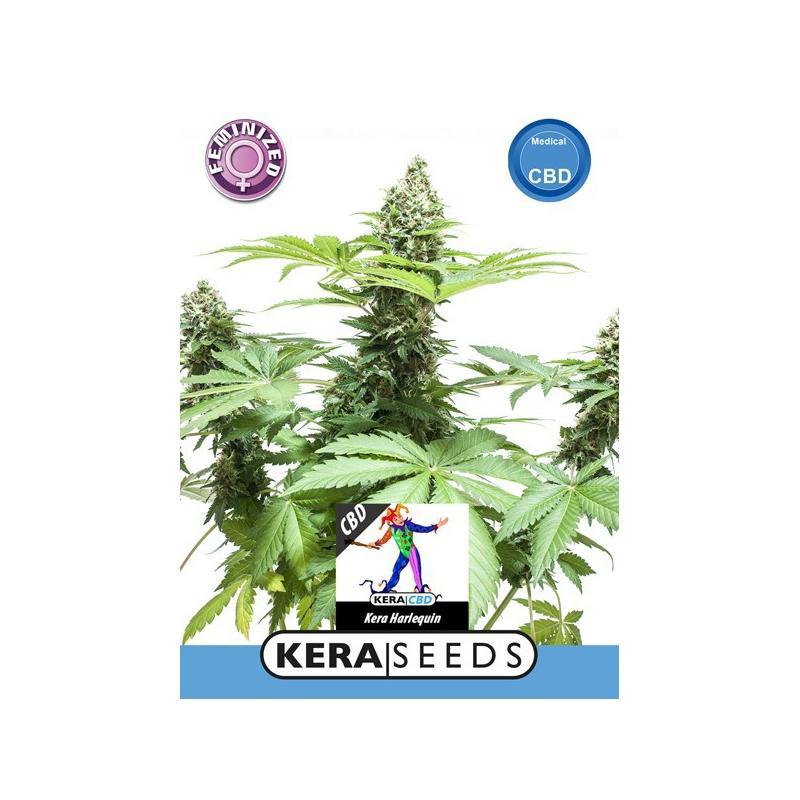 Harlequin CBD Seeds - Kera Seeds, Cuttings and seeds